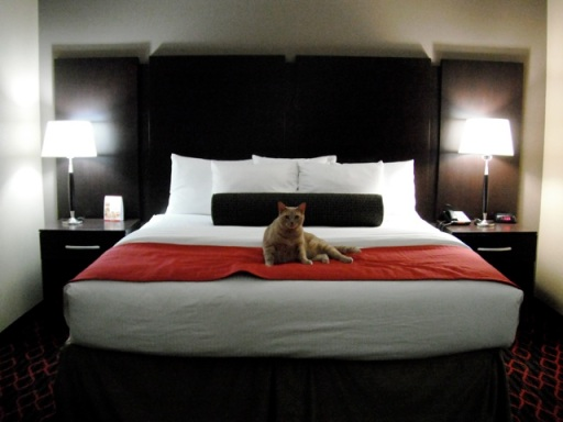 Dog Friendly Motels In Conway Arkansas