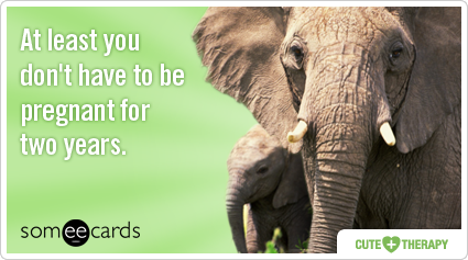 elephant-pregnant-pregnancy-gestation-period-cute_therapy-ecards-someecards